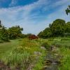 Iris Garden III