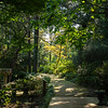 Elizabethan Gardens V
