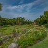 Iris Garden II