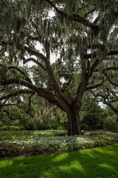 Brookgreen Gardens IX