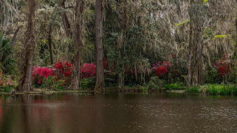 Spring at Magnolia Gardens