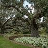 Brookgreen Gardens V