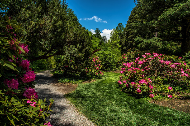 Rhododendrun Walkway