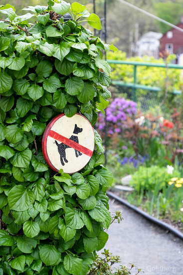 no dogs, bridge of flowers
