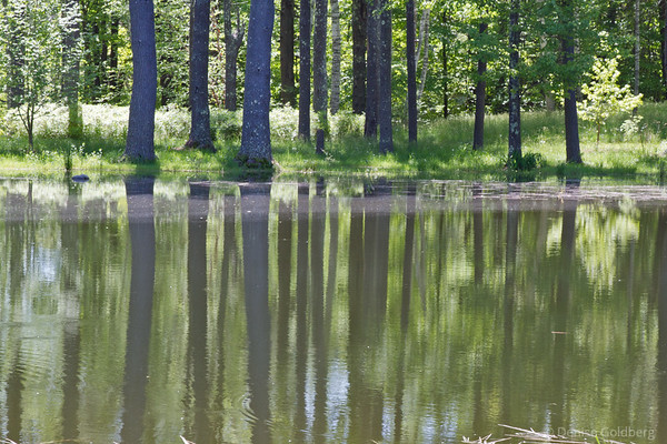 Bedrock Gardens, reflections