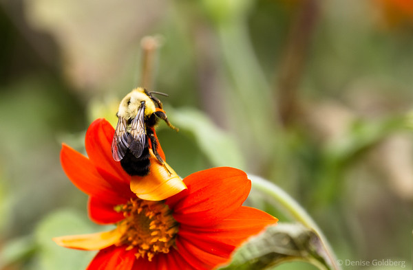 a happy bee