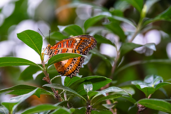 butterfly wings, intricate design