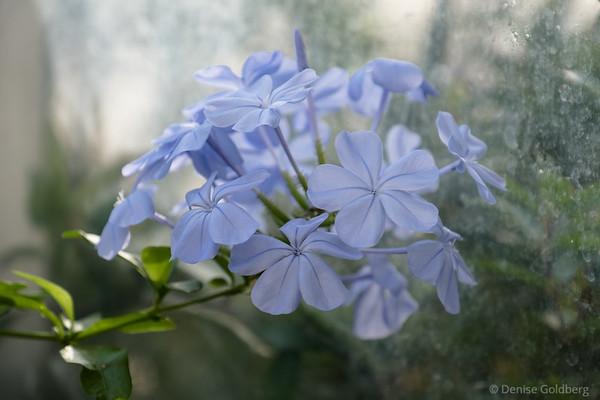 delicate flowers in lavendar