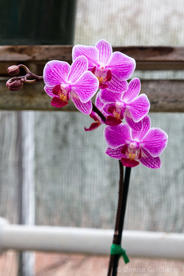 orchids in patterned pink