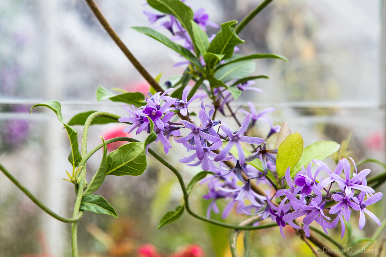 a vine and flowers in lavendar
