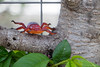 a (toy) bug in the greenhouse