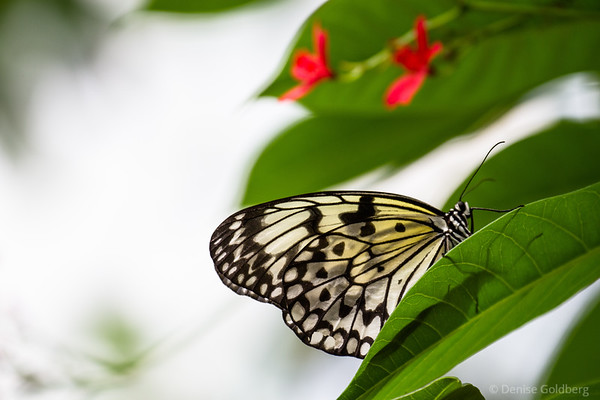 a butterfly wearing patterns in black and white