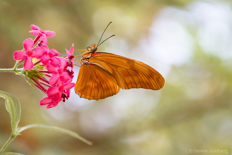 butterfly and flower, a perfect pose