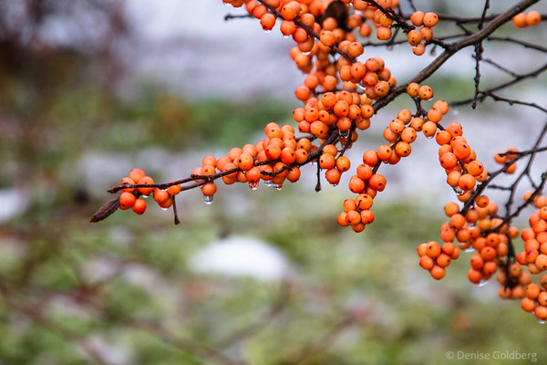 berries splash color