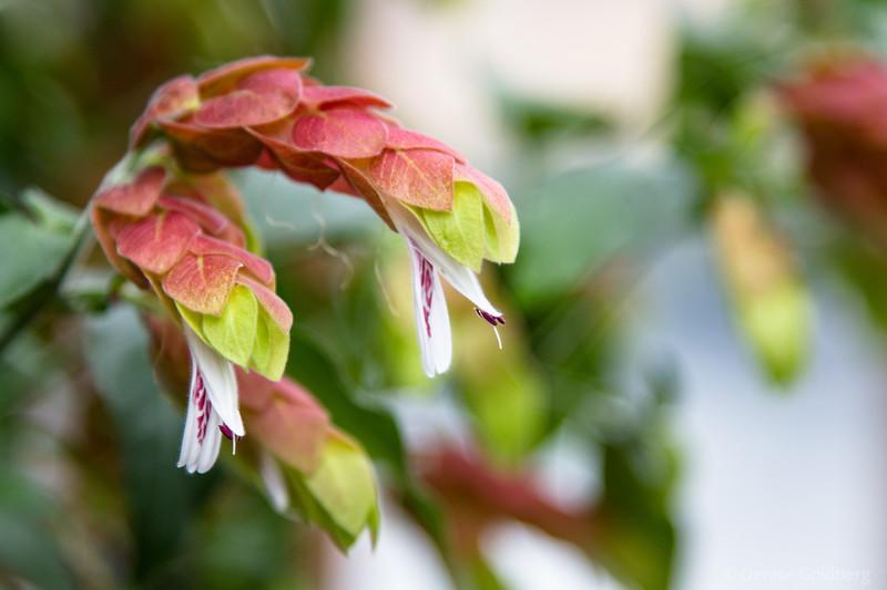 flowers hide under leaves