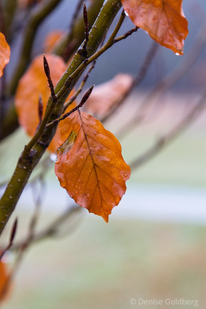 late autumn leaves in brown