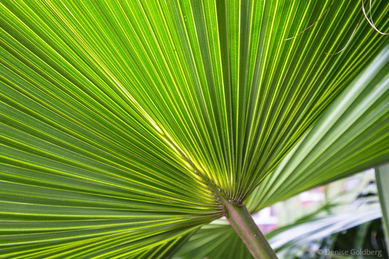 a fan of green