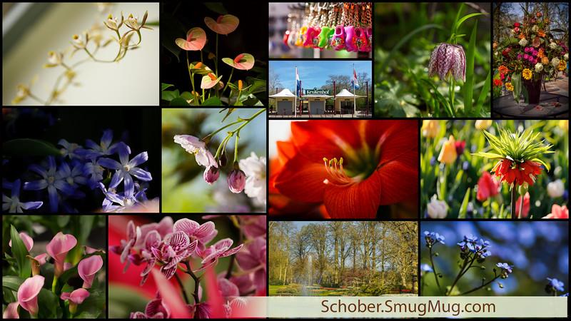 2015-04-23SchoberPhotographyAllRightsReserved