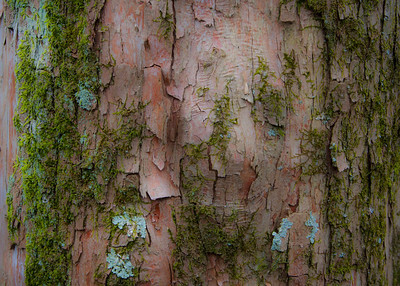 Study of cypress bark on the Atkeson Cypress Trail.