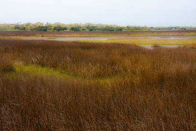 Autumn Salt Marsh