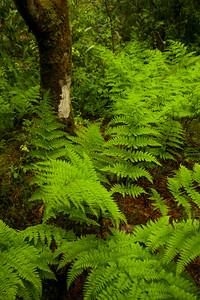 Lush Ferns