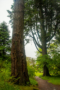 Redwood and Western Cedar