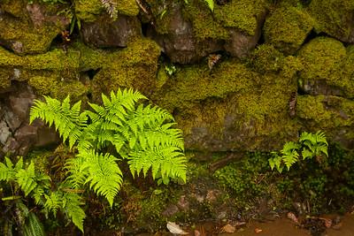 Moss Fern Rock