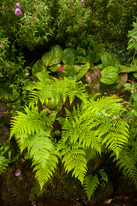 Ferns and Ferns