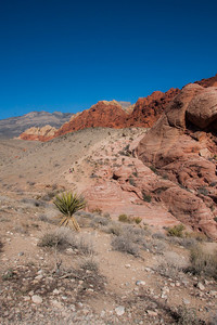 High desert of Red Rock Canyon