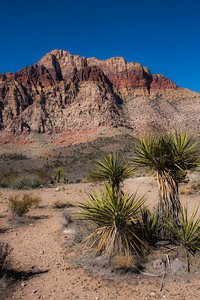 Yucca and red rocks