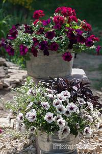 Petunia Tubs