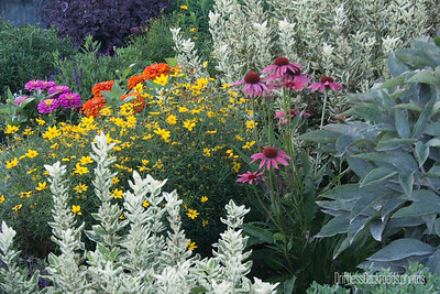 Garden Color