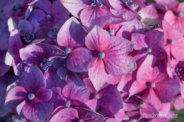 Bloomstruck