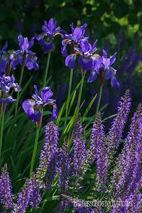 So Purple