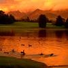 SH pond dusk 16x20