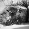 Closeup of cat in black and white