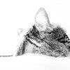 Domestic tabby cat resting in the sun in black and white
