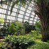 Garfield Park Conservatory Palm House
