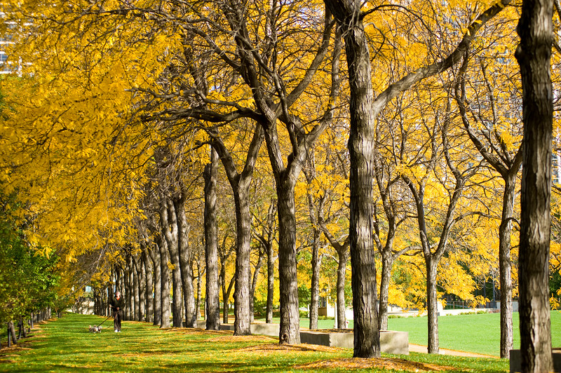 Grant Park near Daley Bicentennial Plaza in the Fall.