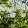 Garfield Park Conservatory Fern Room designed by Jens Jensen