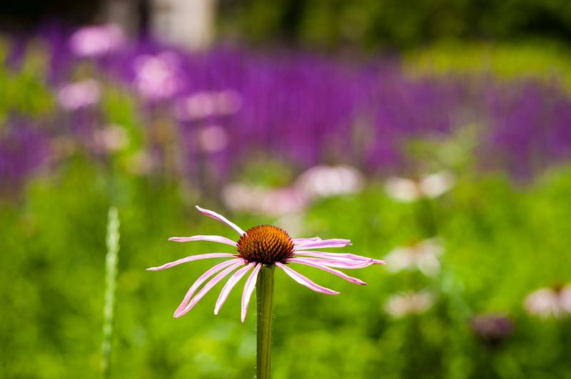 Millennium Park summer 2016 Lurie Garden flowers detail