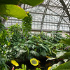 Garfield Park Conservatory Aroid House with artwork by Dale Chihuly