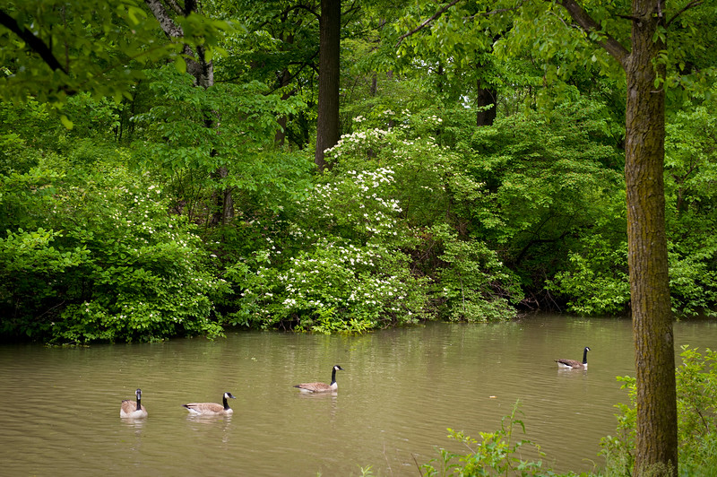 Prairie streams meander through Columbus Park, landscape architect Jens Jensen's masterpiece tribute to the ecology of the midwest.