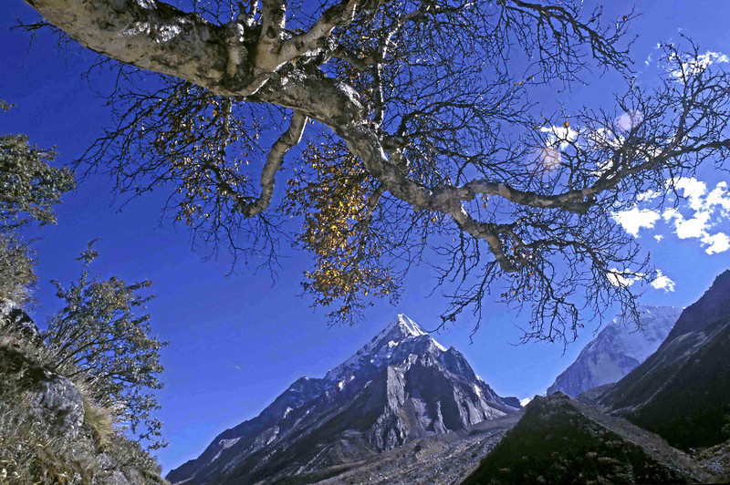 Autumn in the Gangotri valley on the way to Bhujbasa