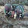 Chris Dunlap - Two Wood Duck Drakes<br /> 21 Jan 11