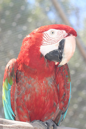 Garuda Aviary