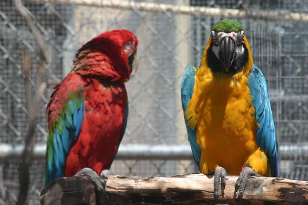 Aviary Birds by Name