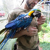 Ana - blue & gold macaw<br /> by Atira Zeoli