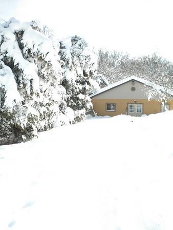 Aviary Snow 2010