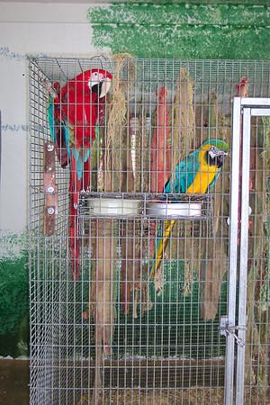 Garuda Aviary's New Home